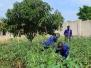 School gardens 2016